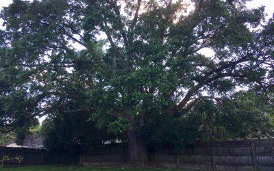 Baton Rouge – Louisiana – Estados Unidos