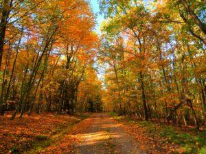 Seneca State Forest- Virginia occidental- Estados Unidos