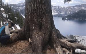 Crater Lake – Oregón – Estados Unidos