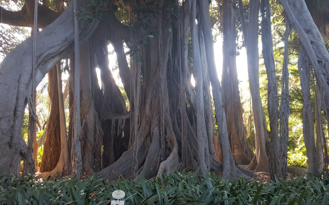 Jardín Botánico – Canarias – España