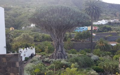 Drago Milenario – Canarias – España