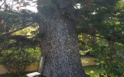 Jardín de orquídeas – Canarias – España